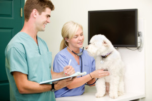 The Top 10 US Schools for a Degree in Veterinary Technician