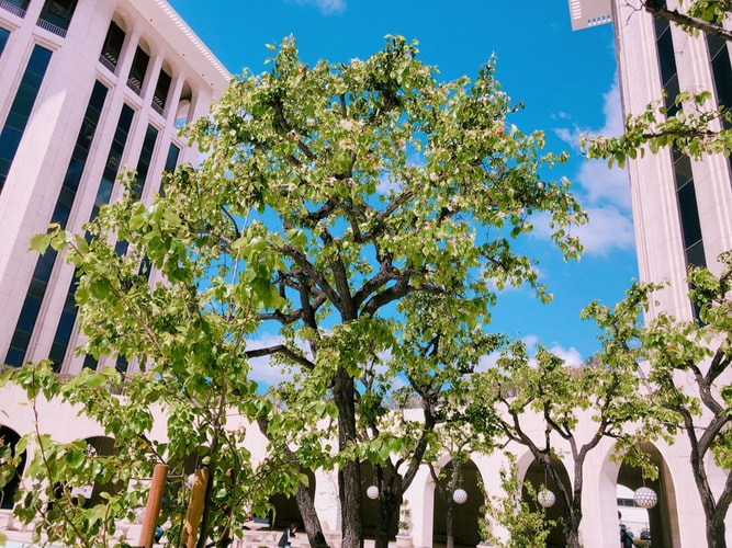 green tree near buildings