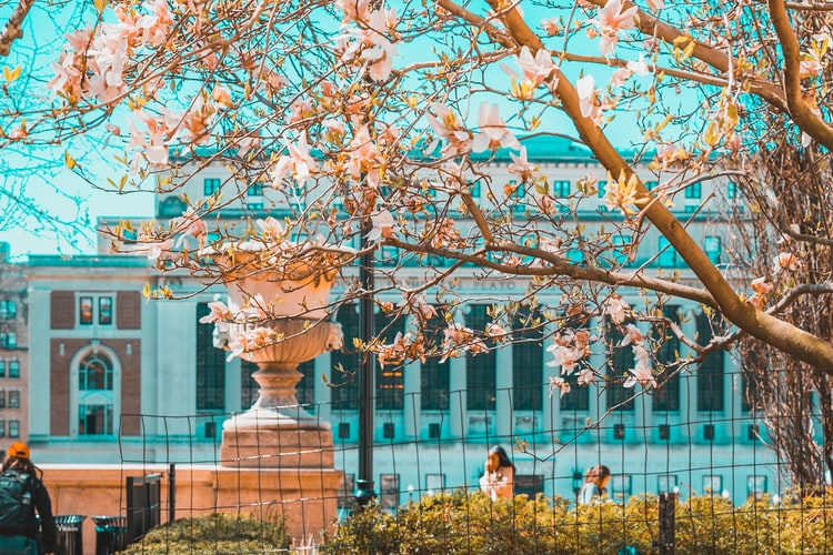 white cherry blossom at daytime